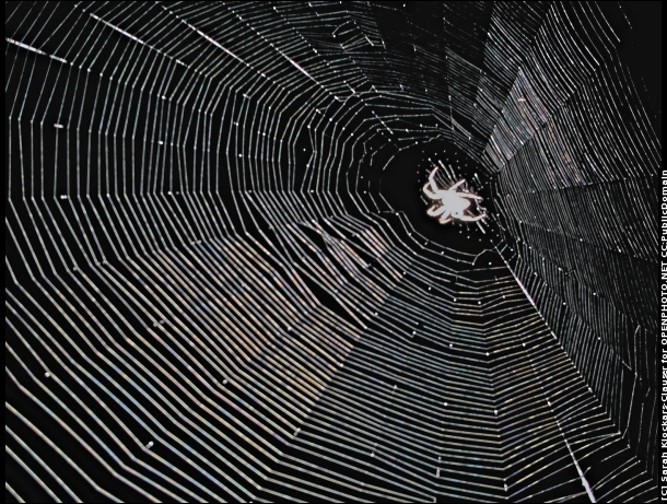 NIGHT SPIDERWEB